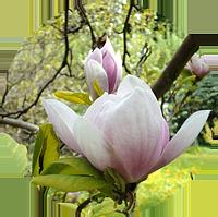 3-blomster-hg